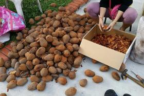 Seven cases of liver injury following consumption of mahogany seeds