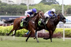 Ateej (No. 4, going down second to Ebraz in his debut on Sept 17 last year) is enjoying a great run in Kuala Lumpur.