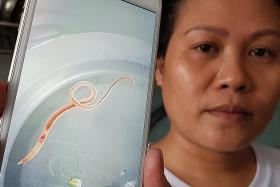 Worms found in water in Ang Mo Kio