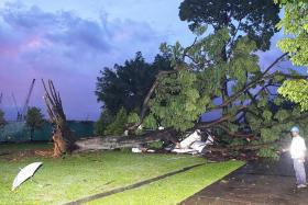 Fallen tree injures 14 people at Christmas party