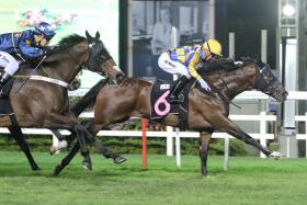 Lim's Reform rushing home second to No Fun No Gain (No. 6) last time out — his third successive second placing. He should break through again in a winnable Class 4 event in Race 5 at Kranji on Wednesday, second day of the Chinese New Year.