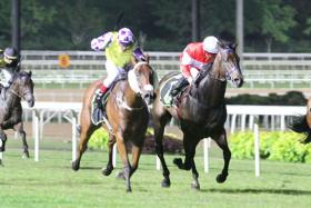 Sacred Don (in yellow) can get his first win in today's Race 4, the Kranji Stakes D event over 1,400m.