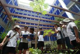 Pupils observing plant species in the garden at Lianhua Primary School and using an app to earn points to collect collar pins on completing tasks.