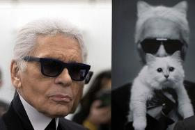 Could Karl Lagerfeld's famous cat Choupette inherit his millions?