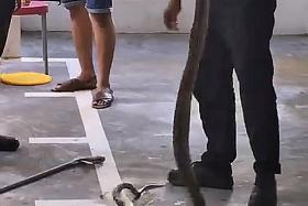 Outrage over video of pest control company staff throwing snake