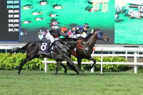 Lim's Lightning beating Galvarino (No. 8) by a short head in the $325,000 Group 2 Aushorse Golden Horseshoe over 1,200m on turf at Kranji last year.