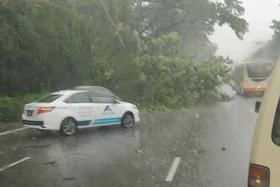 Trees fall across Singapore during heavy storm, cause traffic delays