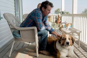 An emotional dog's journey