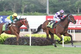 Winning Hobby (No. 14) made a dream debut beating Super Smart on Feb 1.