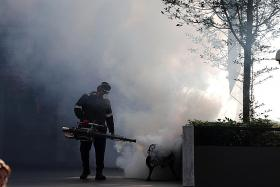 Fogging operations do not address the root cause of mosquito breeding.
