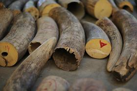 Singapore to ban domestic trade of ivory products from September 2021