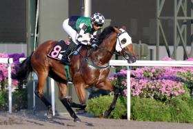 Effortless was one of the stars on the training track at Kranji yesterday morning when he reeled off the 600m in a swift 37.5sec.