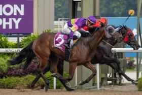 Countofmontecristo (No. 2) fending off stablemate Bold Thruster in the $400,000 Group 2 Merlion Trophy over the Polytrack 1,200m in Race 8 at Kranji yesterday. The middle leg of trainer Michael Clements' hat-trick, he paid $40 for a win.