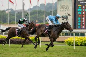 Top Knight proving too good with another scintillating run in Class 2 at Kranji on Sunday.