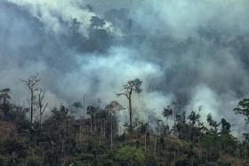 Brazil rejects G-7 aid to fight Amazon fires, blasts Macron