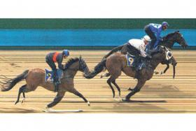 Surge (J Powell astride) beating Restrained (No. 9, V Duric) in yesterday's Trial 2 with Triple Trio (J Azzopardi) finishing third.