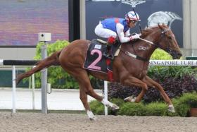 Flaunt beat the daylights out of his rivals in Race 1 at Kranji yesterday.