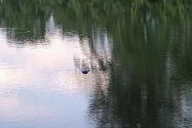 Body found floating under Sengkang bridge