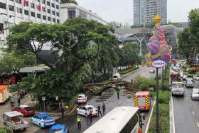 Tree falls on car, blocks four lanes in Scotts Road