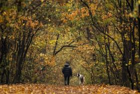Stressed? Try forest bathing