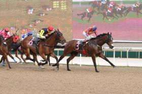 Hat-trick winner Red Rover (right) impressed in his gallop at Kranji yesterday morning. Watch him next season.
