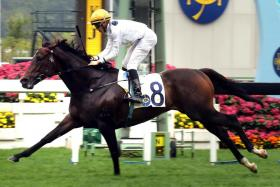 Golden Sixty making it look so easy in the Group 3 Chinese Club Challenge Cup Handicap over 1,400m at Sha Tin on Wednesday.