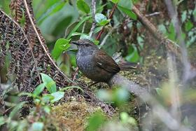 NUS prof and team found 10 new species of birds in Indonesia