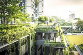 Over 80 new HDB estates to get 'greener'