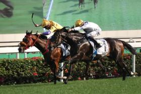 Golden Sixty (No. 1) beating 289-1 outsider Playa Del Puente in yesterday's BMW Hong Kong Derby over 2,000m at Sha Tin.