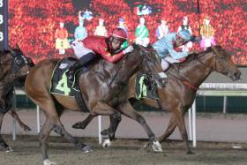 Lim's Dashing (No. 4) resuming fit after a spell to score in the Class 4 Div 2 race over the Polytrack 1,100m in Race 4 at Kranji last Friday night.