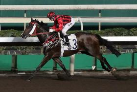 The Frankie Lor-trained Kings Shield giving reigning champion jockey Zac Purton the middle leg of his treble at Sha Tin on Wednesday night.