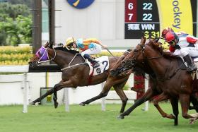 Front-runner Ka Ying Star (No. 2) fending off his rivals in yesterday's Group 3 Lion Rock Trophy over 1,600m at Sha Tin.