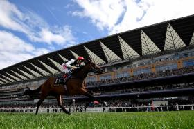 """Royal Ascot Racecourse will host the five-day """"royal"""" meeting from today."""