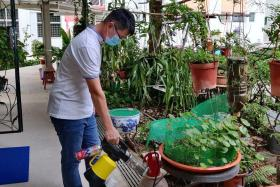 Potong Pasir MP calls on residents to fight dengue together