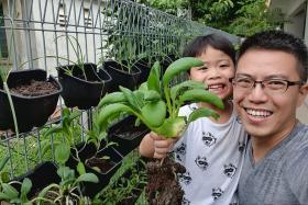 Novice gardeners sprouting around Singapore during Covid