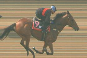 Inferno winning the second trial yesterday in style.