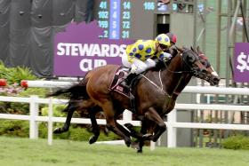 Former Kranji galloper Mr Hanks has returned to form and is the top bet in Ipoh tomorrow.