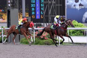Former Singapore winner Pratt Street (No. 8, left, winning at Kranji) looked good during trackwork at Penang yesterday.