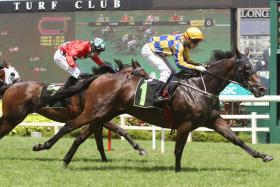 Freedman-trained trio on their toes