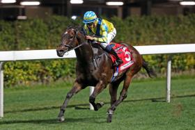 Four-time winner Massive Pocket is well-placed in the last race at Happy Valley tonight.