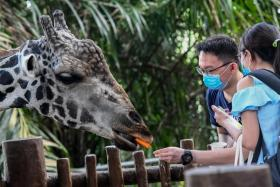 The Singapore Zoo is a popular spot to use the SingapoRediscovers Vouchers