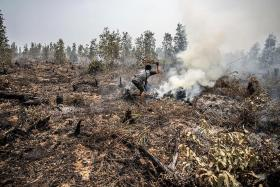 Total forested area burnt in Indonesia bigger than Netherlands