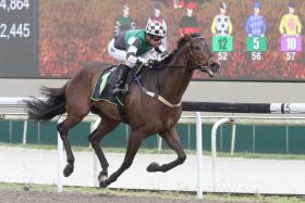 Yesterday's gallops by horses engaged at Kranji