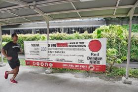 Dengue cases down but danger far from over: NEA