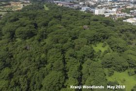 Aerial photos of the Kranji woodland area taken in May 2019 and this month, which shows just a narrow strip of trees near the rail corridor after much of the site was mistakenly cleared - to the consternation of nature groups.