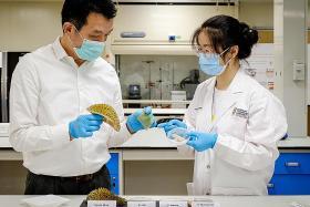 NTU researchers make gel bandages out of durian husks
