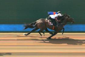 Aftermath poking his nose to beat Valorous at Kranji in Trial 3 yesterday.
