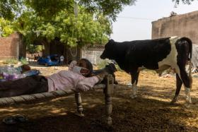A villager with breathing difficulties resting on a cot as he receives treatment at a makeshift open-air clinic, amid the spread of the coronavirus disease in Mewla Gopalgarh village in the northern state of Uttar Pradesh.