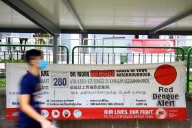 Dengue cases expected to rise with mosquito population up 30%