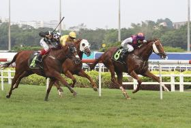 The Wild Bunch (No. 8), a $204 outsider, hanging on to win by a nose from last-start winner Just Landed (No. 4) to give trainer Jason Ong the second leg of his double at Kranji on Saturday.